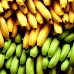 reife und unreife Bananen