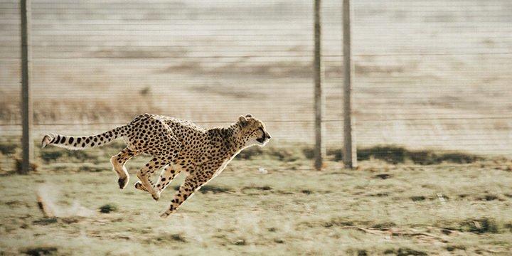 HIIT oder: Warum jeder Läufer zwischendurch auch mal sprinten sollte
