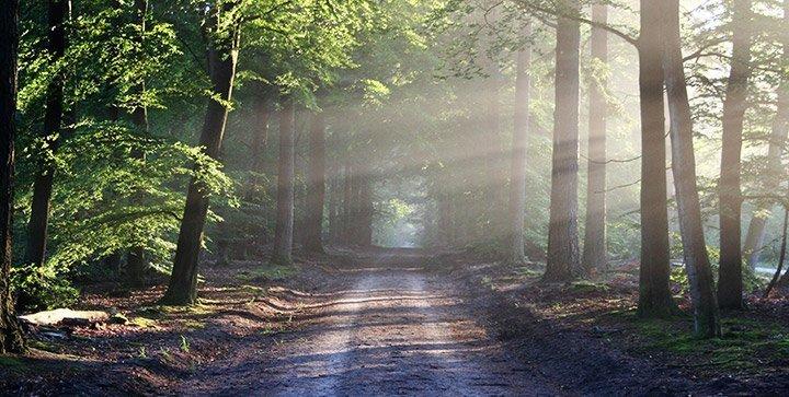 Der Survival-Guide für den langen Lauf