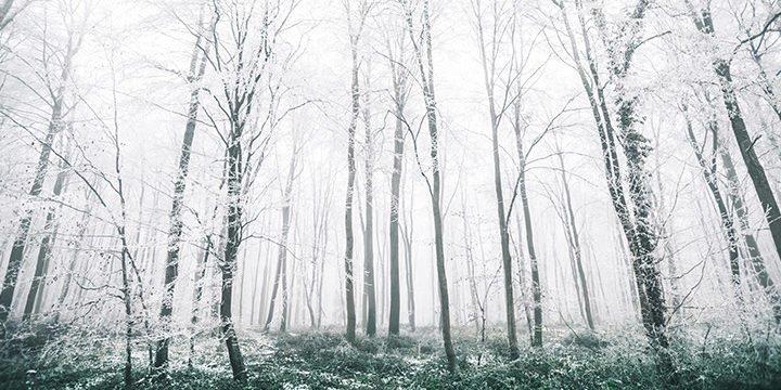 Eine Winterliche Waldlandschaft