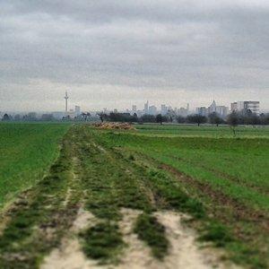 Das Ziel vor Augen: die Frankfurter Skyline