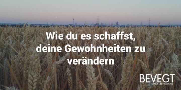 Titelbild: Ein Getreidefeld am Abend, im Hintergrund ist die Skyline von Frankfurt zu sehen
