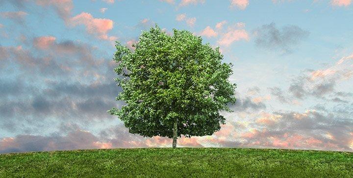 Ein Baum inmitten einer Wiese