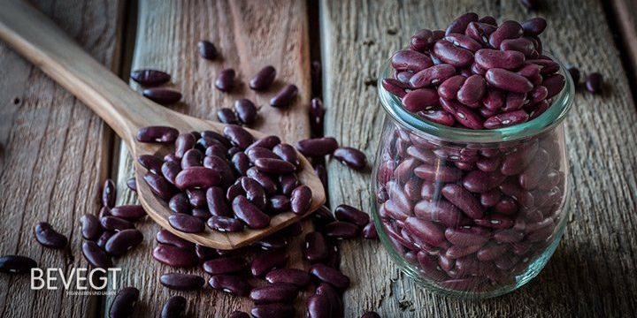Eiweiß in der pflanzlichen Ernährung: Das sind die Ergebnisse unserer Leser-Umfrage