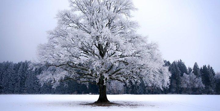 Ein verschneiter Baum in einer Winterlandschaft