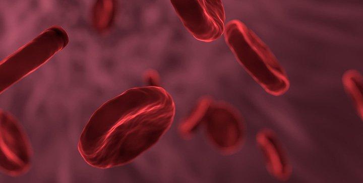 Rote Blutkörperchen in einem Blutgefäß
