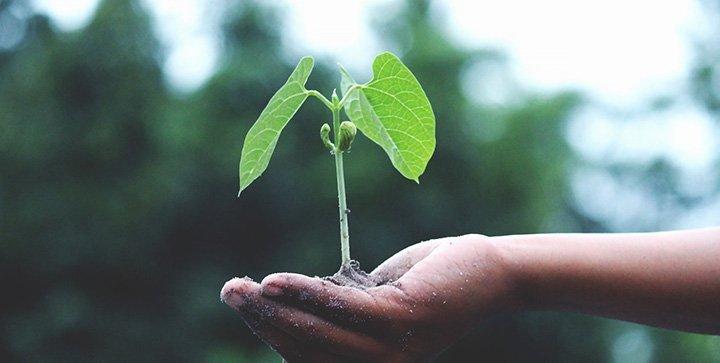 Titelbild: Eine Hand hält eine kleine Pflanze