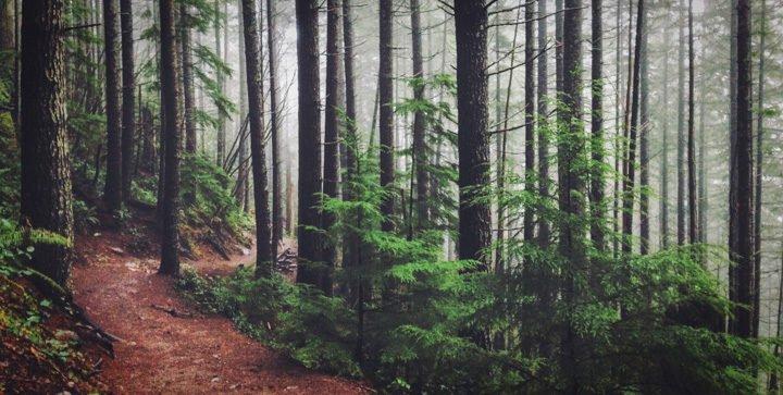 Ein verschlungener Wanderweg im Wald