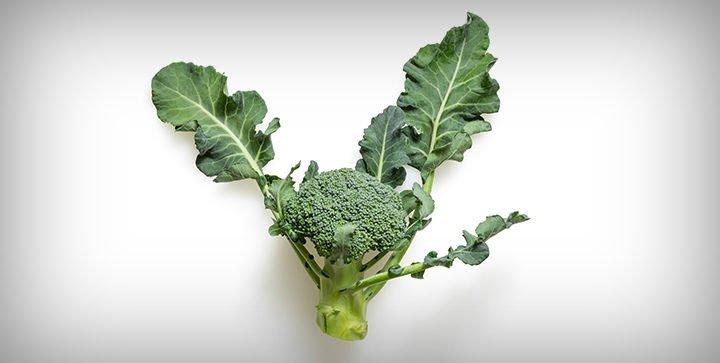 Titelbild: Ein Brokkoli-Röschen vor einem weißen Hintergrund