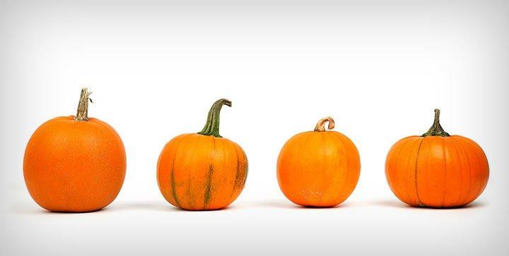 Vier Kürbisse vor einem weißen Hintergrund